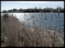 Legion Way and the cattails